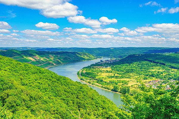 Aussicht über den Rhein und die Natur.